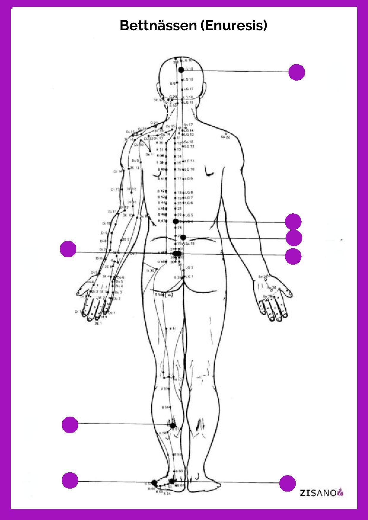 Meridiane - Bettnässen (Enuresis)- Behandlung