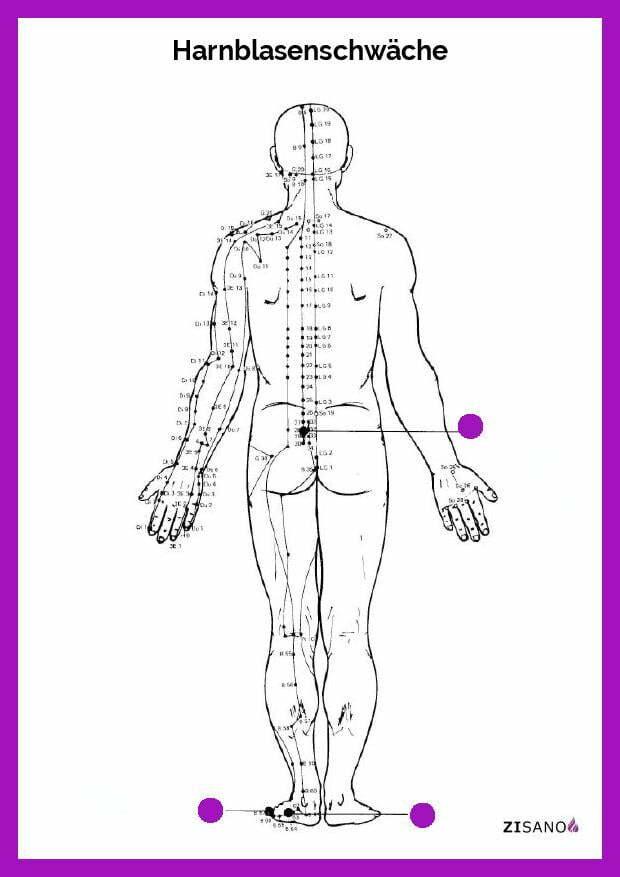 Meridiane - Harnblasenschwäche- Behandlung