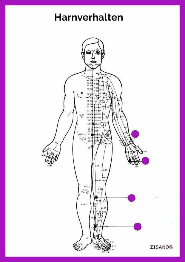 Meridiane - Harnverhalten- Behandlung
