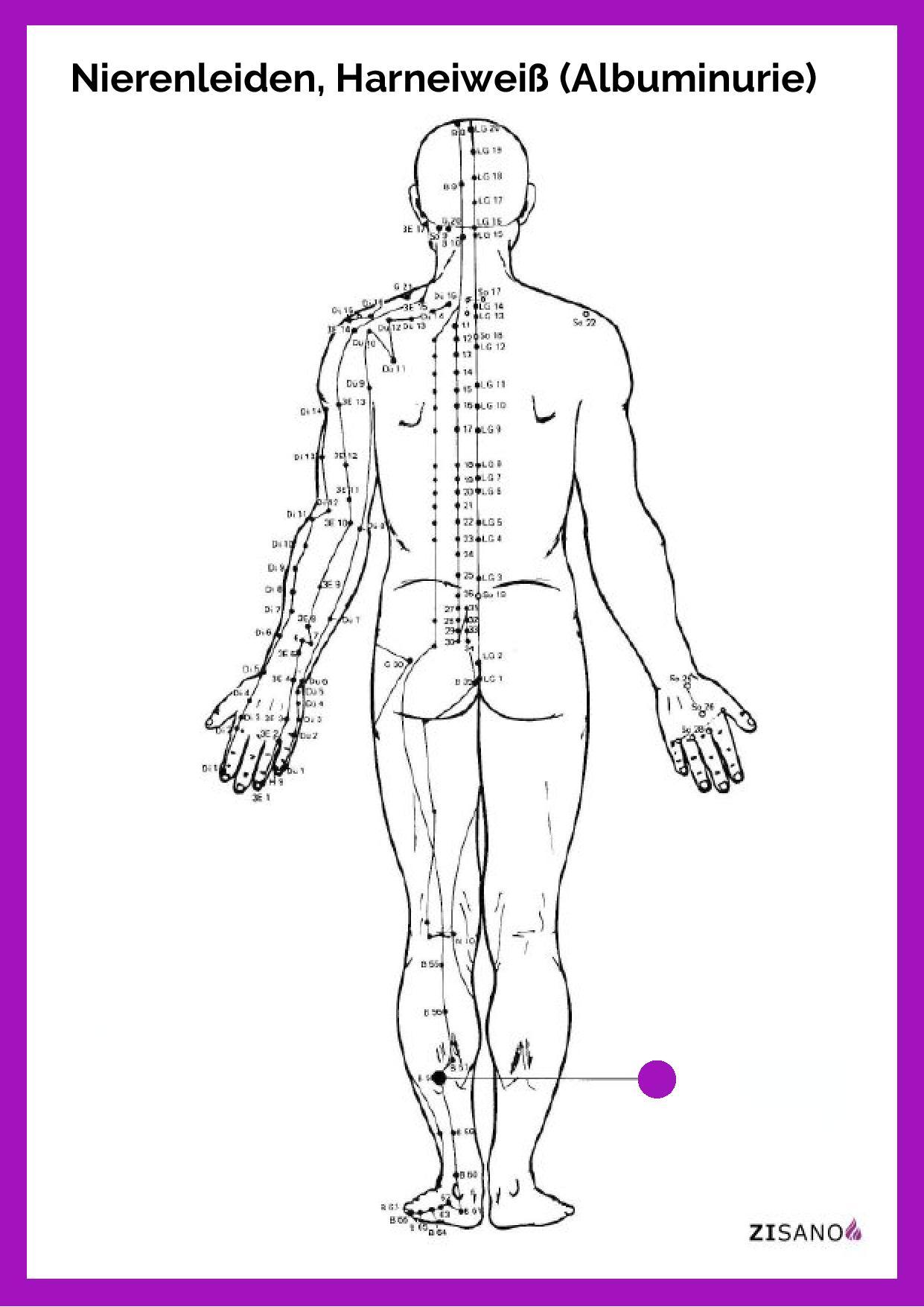 Meridiane - Nierenleiden - Harneiweiß - Albuminurie - Beschwerden