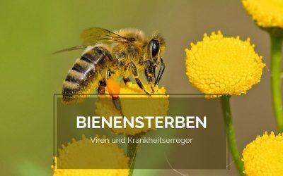 Nahrung für die Bienen – was wir tun können