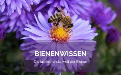 Bienenwissen – Die faszinierende Welt der Bienen