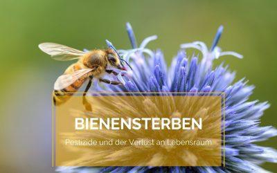 Bienensterben: Pestizide und der Verlust an Lebensraum